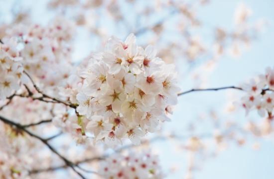 蕨市民公園 お花見バーベキュー