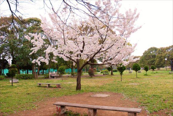 篠崎公園 花見