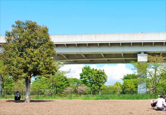 舎人公園 バーベキューレンタル