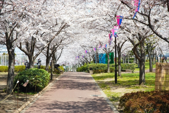 小松川千本桜 バーベキューレンタル